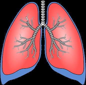 polmoni1
